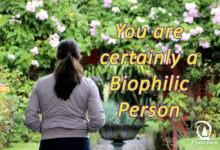 Photo of Biophilia, Welcome Home Nature