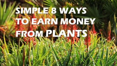 Photo of 8 Simple Ways To Earn Money From Plants