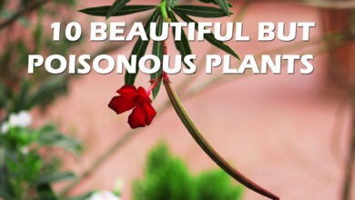 Photo of 10 Beautiful But Poisonous Plants