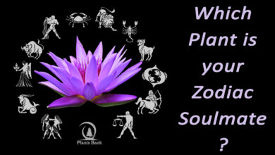 Photo of Which Plant is your Zodiac soulmate?