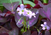 Photo of IT'S NOT A SUPERSTITION, THESE 10 PLANTS BRING GOOD LUCK, HAPPINESS AND MONEY