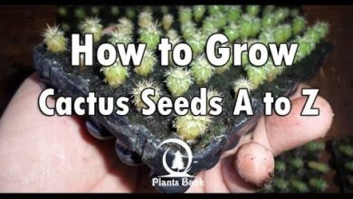 Photo of How to Grow Cactus from Seeds, Free Training Course