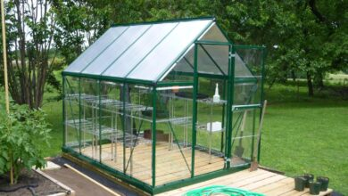 Photo of Top 10 Reasons for Having a Greenhouse in Your Yard