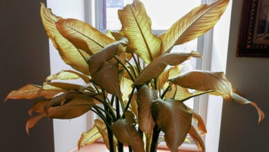 Photo of How To Revive Indoor Plants