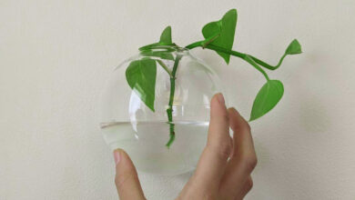 Photo of Understanding Hydroponics, How to grow plants in water