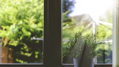 Photo of Summer Plant Care – Best tips to protect indoor plants from the summer heat