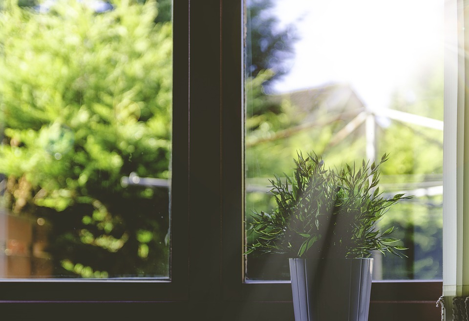 Summer Plant Care - Best tips to protect indoor plants from the summer heat