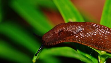 Photo of EASY NATURAL WAYS TO KEEP SLUGS OUT OF YOUR GARDEN