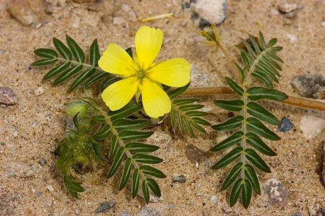 8 APHRODISIAC PLANTS THAT BOOST YOUR SEX DRIVE - plants bank