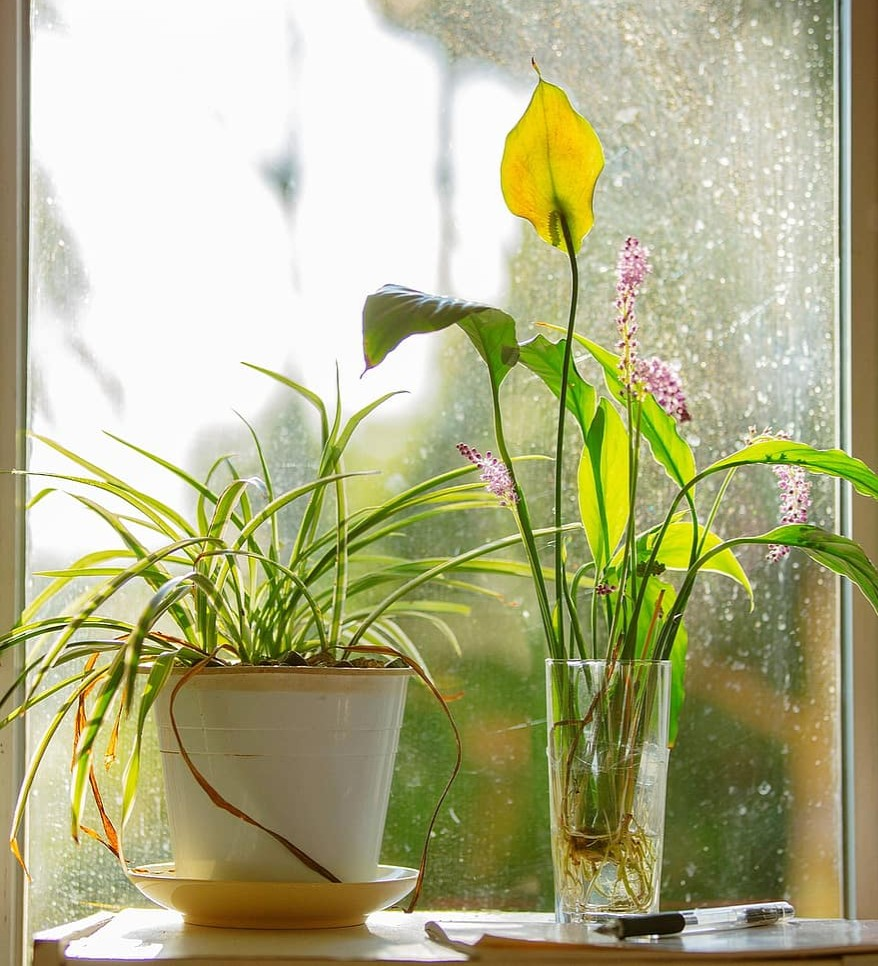 Why plants are not flowering? - plants bank