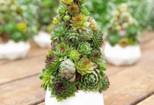 Photo of The succulent Christmas tree, the new trend 2020!