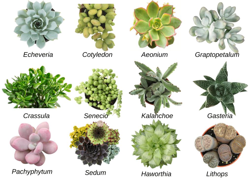 Succulents - plants bank