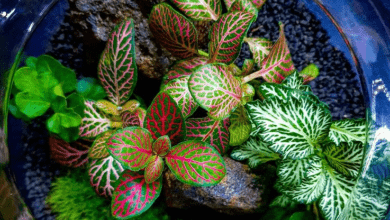 Photo of Fittonia plant: Popular species and care tips