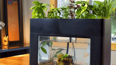 AQUAPONICS - A SYMBIOSIS SYSTEM WHERE EVERYTHING IS TRANSFORMED AND NOTHING IS LOST - plants bank