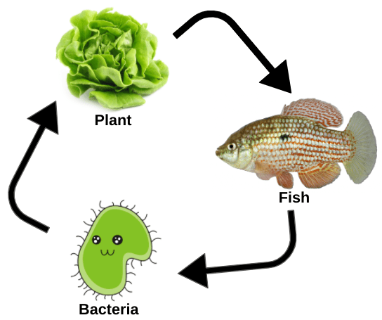 Plants - bacteria and fish