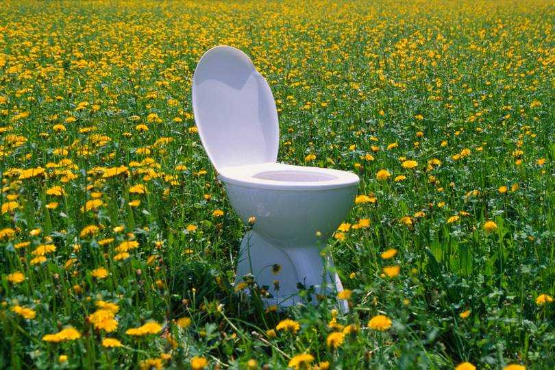 How to use Human urine in the garden? - plants bank