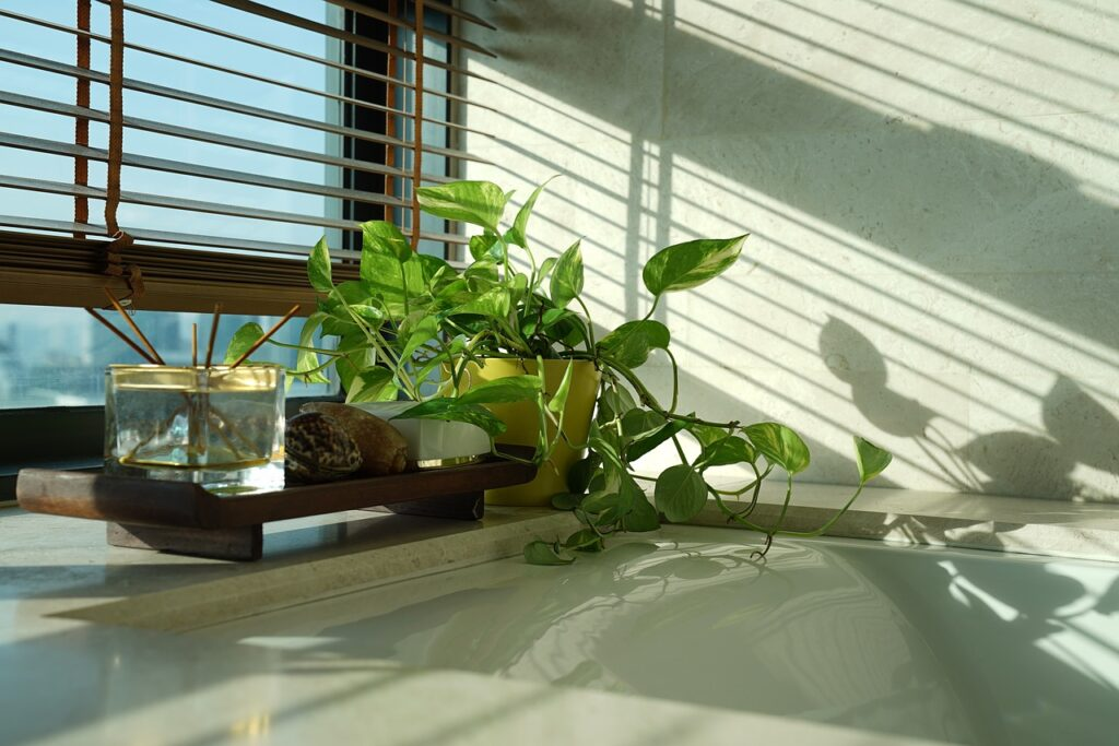 8 Tips To Care For Houseplants During Winter? - plants bank