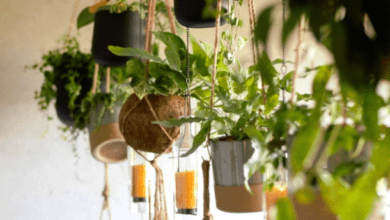 Hanging plants - plants bank