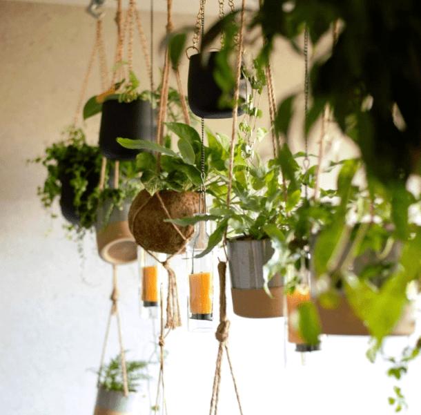 Hanging plants - plants bank